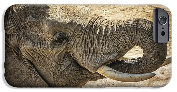 Elephants iPhone Cases - African Elephant iPhone Case by Mitch Shindelbower