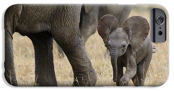 Vertebrata iPhone Cases - African Elephant Mother And Under 3 iPhone Case by Suzi Eszterhas