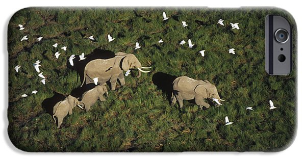 Cattle Egret iPhone Cases - African Elephant Parents And Two Calves iPhone Case by Tim Fitzharris