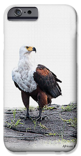 Concept Digital Art iPhone Cases - African Fish Eagle on white with id tag iPhone Case by Ronel Broderick
