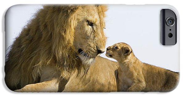 Felidae iPhone Cases - African Lion Panthera Leo Seven iPhone Case by Suzi Eszterhas