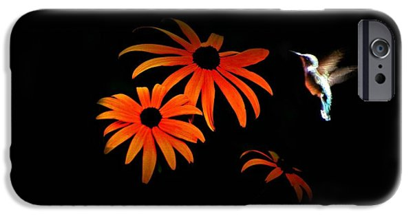 Animals Photographs iPhone Cases - After Dark iPhone Case by Barbara S Nickerson