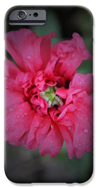 Colorful Abstract iPhone Cases - After the Rain - Poppy Macro 2 iPhone Case by Richard Andrews