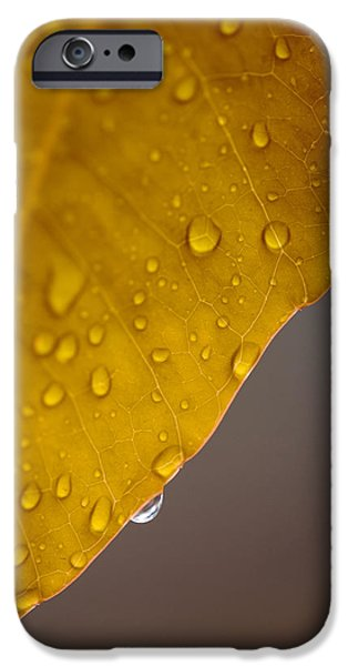 Yellow Ochre iPhone Cases - After the Rain iPhone Case by Stephen Anderson