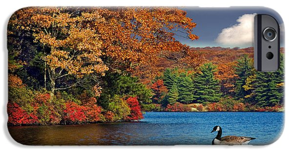 Fall iPhone Cases - Afternoon Swim iPhone Case by Susan Candelario