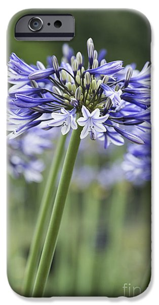 Opening iPhone Cases - Agapanthus Multicolour iPhone Case by Tim Gainey