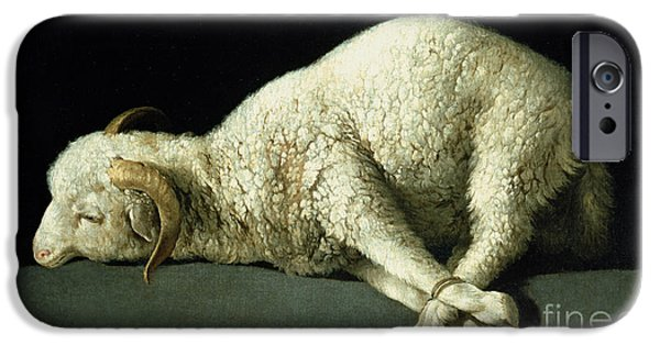 Religious iPhone Cases - Agnus Dei iPhone Case by Francisco de Zurbaran