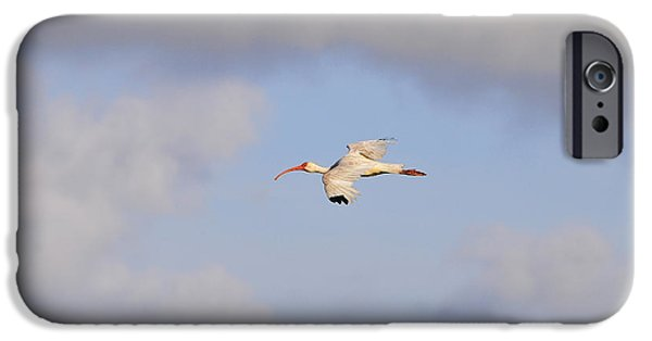 Birds iPhone Cases - Airborne Ibis iPhone Case by Al Powell Photography USA