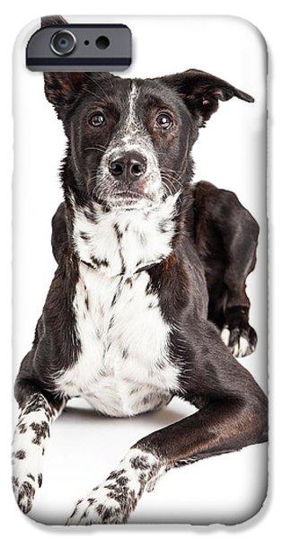 Mixed Breed iPhone Cases - Alert Australian Shepherd Mixed Breed Dog Looking Up iPhone Case by Susan  Schmitz