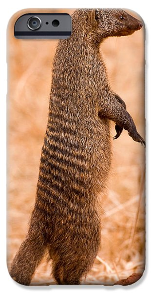 Tarangire iPhone Cases - Alert Mongoose iPhone Case by Adam Romanowicz
