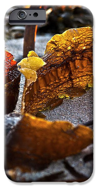 Algae at low tide iPhone Case by Heiko Koehrer-Wagner