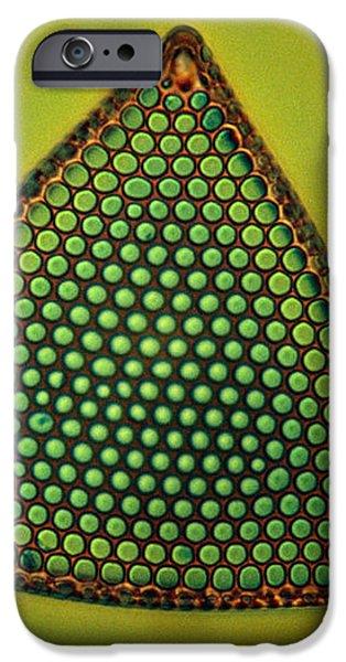 Algae, Diatom, Triceratium Ladus, Lm iPhone Case by Eric Grave