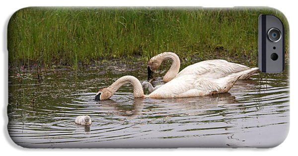 Swans... iPhone Cases - All Fishing iPhone Case by Linda Kerkau