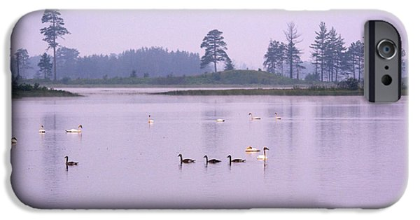 Swans... iPhone Cases - All Hanging Together iPhone Case by Linda Kerkau