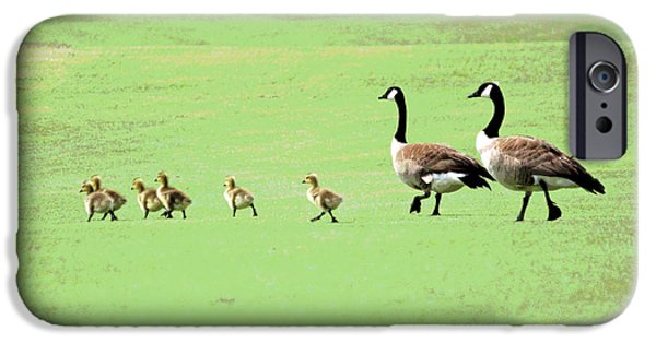 Baby Bird Digital iPhone Cases - All in the Family II iPhone Case by Suzanne Gaff