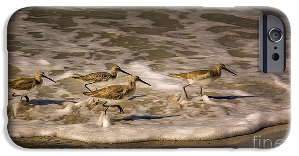 Sea Birds Photographs iPhone Cases - All Together Now iPhone Case by Marvin Spates