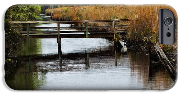 Pines iPhone Cases - Alligator River National Wildlife Refuge iPhone Case by Tom Gari Gallery-Three-Photography