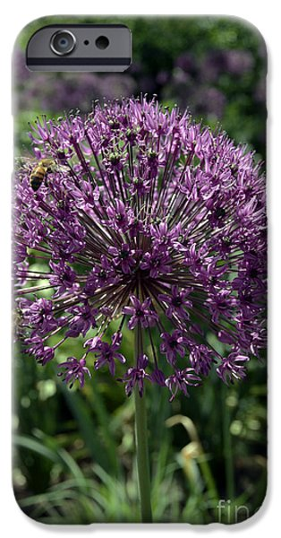 Purple Sensation iPhone Cases - Allium 9363 iPhone Case by Terri Winkler