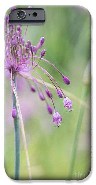 Alliums iPhone Cases - Allium Carinatum Flower iPhone Case by Tim Gainey