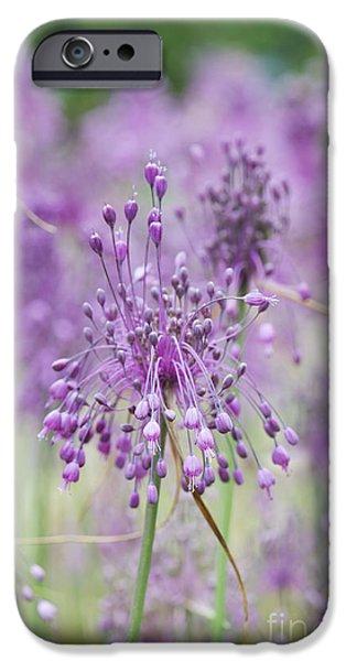 Alliums iPhone Cases - Allium Carinatum Flowering iPhone Case by Tim Gainey