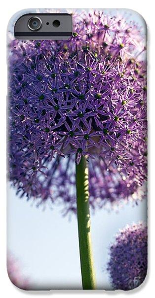 Alliums iPhone Cases - Allium Flower iPhone Case by Tony Cordoza