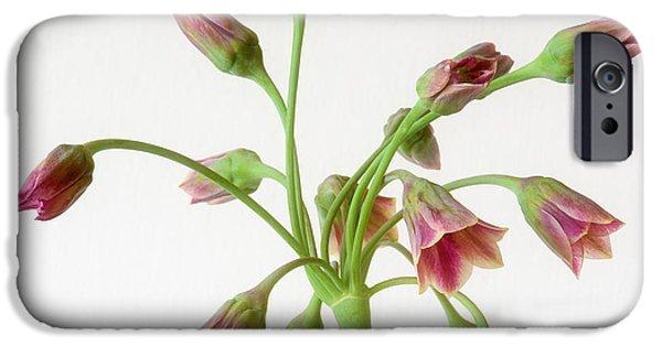 Alliums iPhone Cases - Allium siculum or Sicilian honey garlic iPhone Case by Janet Burdon