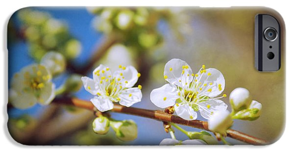 Close Up Floral iPhone Cases - Almond Tree Branch iPhone Case by Carlos Caetano