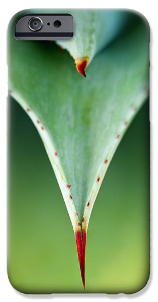 Buy iPhone Cases - Aloe thorn and leaf macro iPhone Case by Johan Swanepoel