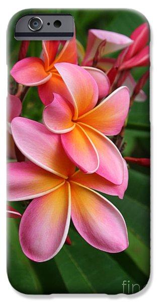 Sharon Mau iPhone Cases - Aloha Lei Pua Melia Keanae iPhone Case by Sharon Mau