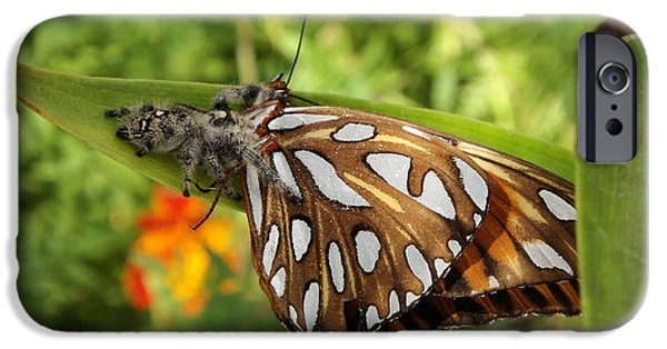 Butterfly Prey iPhone Cases - Along Came A Spider iPhone Case by Heather Porfiriadis