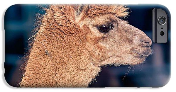 Llama iPhone Cases - Alpaca wants to meet you iPhone Case by TC Morgan
