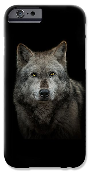 Wolf Photographs iPhone Cases - Alpha Male  iPhone Case by Paul Neville