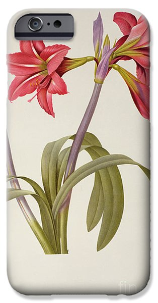 19th Century Drawings iPhone Cases - Amaryllis Brasiliensis iPhone Case by Pierre Redoute