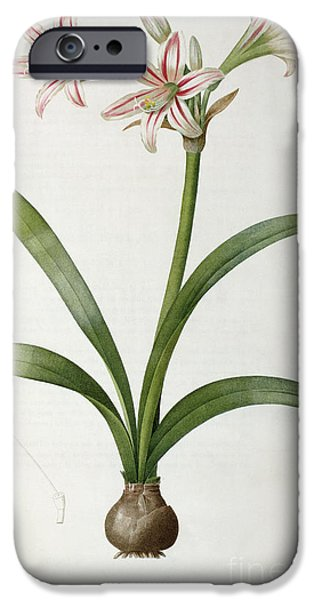 Botanical Paintings iPhone Cases - Amaryllis Vittata iPhone Case by Pierre Redoute