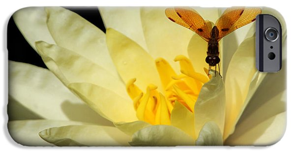 Faries iPhone Cases - Amber Dragonfly Dancer Too iPhone Case by Sabrina L Ryan