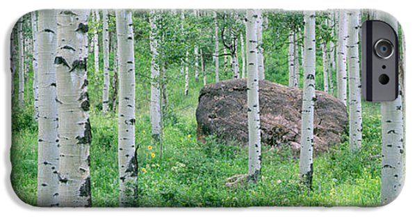 White River Scene Photographs iPhone Cases - American Aspen Trees In The Forest iPhone Case by Panoramic Images