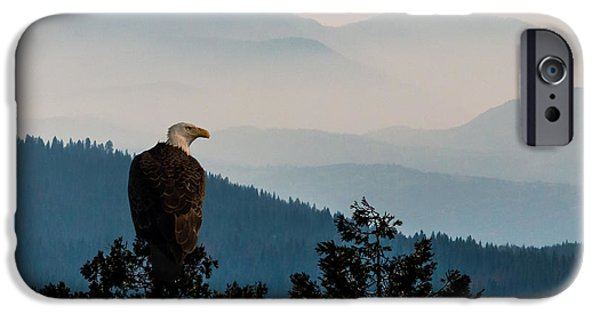 Freedom iPhone Cases - American Bald Eagle Sentinel iPhone Case by Patti Deters