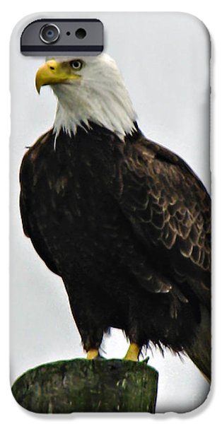 Haybale iPhone Cases - American  Bird iPhone Case by Robert Bales