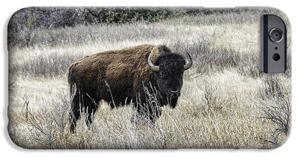 Animals Photographs iPhone Cases - American Bison iPhone Case by Phyllis Taylor
