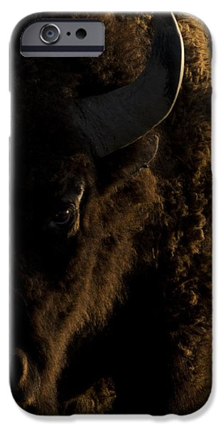 Bison iPhone Cases - American Bison Sunrise iPhone Case by Noah Bryant