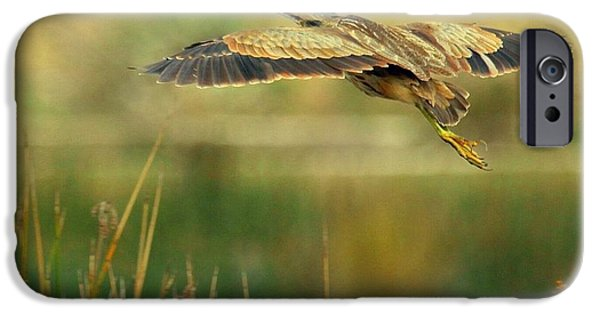 Birds iPhone Cases - American Bittern in flight iPhone Case by Myrna Bradshaw