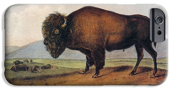 Audubon iPhone Cases - American Buffalo, 1846 iPhone Case by Granger