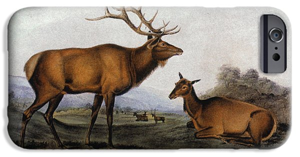 Audubon iPhone Cases - American Elk, 1846 iPhone Case by Granger