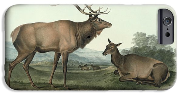 1856 iPhone Cases - American Elk iPhone Case by John James Audubon