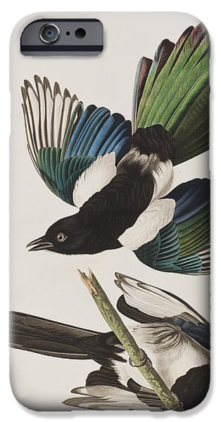 Magpies iPhone Cases - American Magpie iPhone Case by John James Audubon