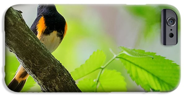 Warbler iPhone Cases - American Redstart iPhone Case by Bill Wakeley