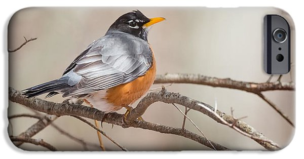 Robin iPhone Cases - American Robin iPhone Case by Bill  Wakeley