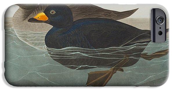 Sea Birds Drawings iPhone Cases - American Scoter Duck iPhone Case by John James Audubon