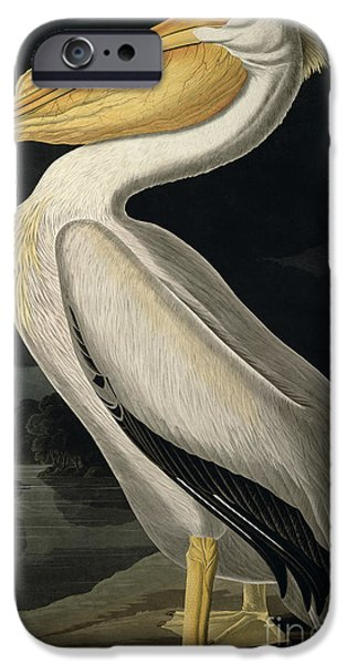 White iPhone Cases - American White Pelican iPhone Case by John James Audubon