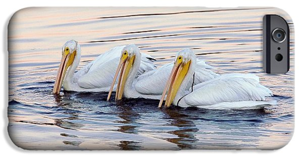 Bodega Bay iPhone Cases - American White Pelicans iPhone Case by Bob Gibbons